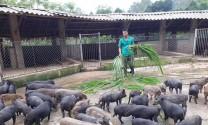 Không nên phát triển ồ ạt nông nghiệp hữu cơ
