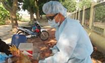 Bình Định: Nhận vaccine phòng bệnh cho gia súc