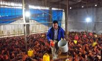 Phúc: Hiệu quả mô hình chăn nuôi theo tiêu chuẩn ASEAN GAHP