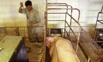 Chăn nuôi an toàn sinh học lên ngôi