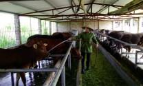 Phòng bệnh ký sinh trùng  đường máu ở bò