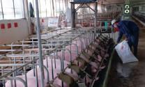 Giảm giá thành chăn nuôi: Bắt đầu từ nguyên liệu