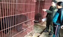 Gây nuôi động vật hoang dã: Tránh phát sinh hệ lụy