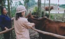 Hà Tĩnh: Chuẩn bị tiêm phòng đợt 1 cho gia súc, gia cầm