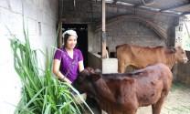 Thanh Hóa: Chú trọng phát triển chăn nuôi địa bàn miền núi