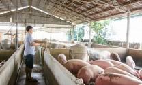Bàu Bàng (Bình Dương): Được công nhận vùng an toàn dịch bệnh động vật