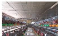 Công ty TNHH MTV Ánh Dương Khang: Sử dụng chế phẩm chứa hoạt chất tannin thay kháng sinh trong nuôi gia cầm