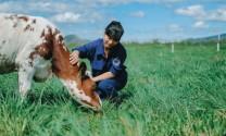 Bền vững từ chăn nuôi sạch