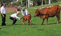 Khuyến nông, điểm tựa  giúp nông dân làm giàu
