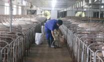 Giải pháp quản lý nước thải trong chăn nuôi