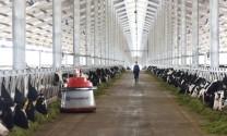 Vinamilk khai trương tổ hợp trang trại bò sữa tại Thanh Hóa