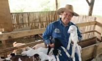 Trại Go Farm nuôi dê sữa siêu sạch