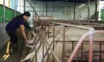 Bắc Giang: 9,5 tỷ đồng hỗ trợ chăn nuôi nông hộ