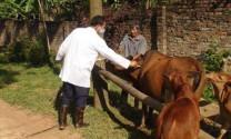 Quảng Bình: Tiêm phòng 18.000 liều vaccine lở mồm long móng