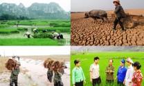 Hỗ trợ 90% phí bảo hiểm nông nghiệp cho hộ nghèo