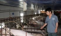 Khuyến khích doanh nghiệp đầu tư vào nông nghiệp, nông thôn