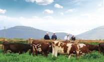 Bài toán phát triển chăn nuôi chất lượng cao, bền vững