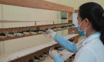 An Giang: Rà soát các nhà nuôi chim yến tại Phú Tân