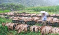 Phát triển đàn ong hướng hàng hóa