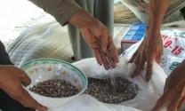 Vi phạm hành chính về lĩnh vực TĂCN, thủy sản phạt đến 200 triệu đồng
