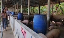 Vĩnh Phúc: Phê duyệt kinh phí xử lý chất thải chăn nuôi
