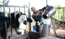 Quy chuẩn kỹ thuật quốc gia về sữa tươi nguyên liệu