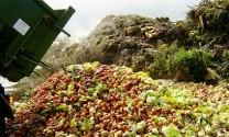 Châu Âu: Giảm phát thải methane bằng phụ gia thức ăn từ trái cây
