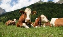Quảng Bình: Đưa chăn nuôi Quảng Ninh thành mũi nhọn kinh tế