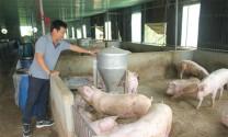 Chăn nuôi sạch, rộng cửa thị trường