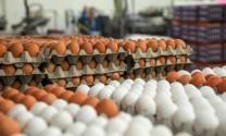 Thái Lan: Bình ổn giá trứng gia cầm