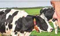 Năm 2067, ngành sữa sẽ thế nào?