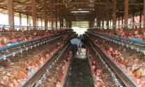 Thái Nguyên: Đã cập nhật dữ liệu 301 trang trại, cơ sở chăn nuôi gia cầm