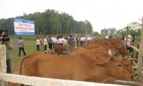 Thái Nguyên: Chăn nuôi tiến triển khả quan