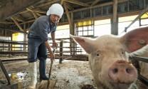 Ứng dụng công nghệ Nhật Bản trong chăn nuôi