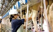Thị trường sữa Việt: Cuộc tranh đua giành thị phần