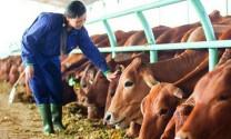 Biểu dương mô hình chăn nuôi công nghệ cao