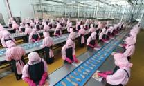 Tăng xuất khẩu sản phẩm chăn nuôi: Bắt đầu từ chế biến