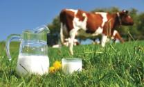 Kim ngạch nhập khẩu sữa tăng 2,2%