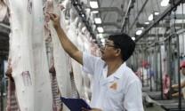 Xuất khẩu thịt lợn gặp khó vì xu hướng bảo hộ gia tăng