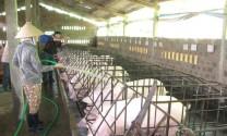 Các yếu tố ảnh hưởng đến nhu cầu nước của vật nuôi