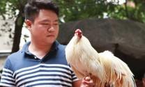 Gà tre Tân Châu