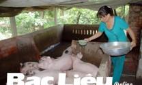 Cần nhân rộng mô hình trang trại chăn nuôi