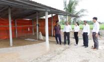 Cần Đước phát hiện gia cầm chết do nhiễm cúm A/H5N6