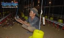 Mô hình có một không hai ở Quảng Ngãi: Nuôi gà cho nghe nhạc