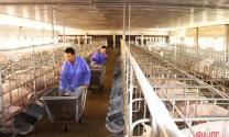 """Nghị quyết """"tam nông"""" tạo bước đột phá cho ngành chăn nuôi ở Hà Tĩnh"""