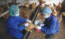 Vùng, cơ sở an toàn dịch bệnh động vật
