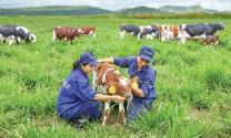 Triển vọng ngành sữa