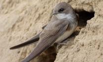 Đồng Nai: Khó kiểm soát tình trạng nuôi chim yến