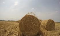 Đồng Tháp: Trữ rơm khô mùa lũ, lợi nhuận khá