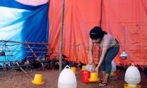 Hậu Giang: Nâng cao ý thức xử lý chất thải chăn nuôi